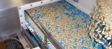 conveyor belt for canning industry