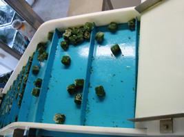 esteira transportadora legumes