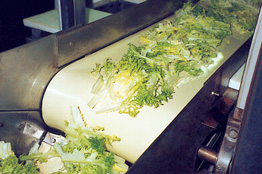 monomaterial food conveyor belt